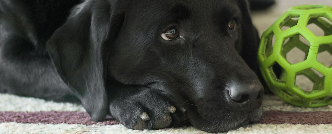 sandusky county dog warden